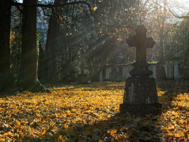 A l'ombre du vieux noyer, l'arbre du cimetière